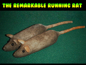 Remarkable Running Rat